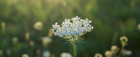 Awakening Aromatherapy®<br /> 総合コース